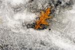 Leaf-on-ice-2