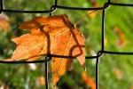 Leaf-in-link
