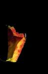 Leaf-lamp