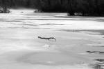 Misty frozen pond flotsam